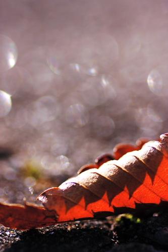 Daydream_of_a_fallen_leaf