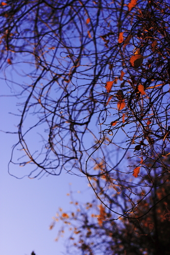 Leaves_and_branches