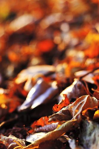 Fallen_leaves_in_winter