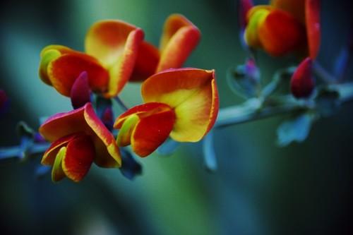 Flower_my_friend_likes