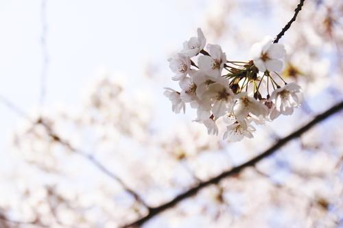 Flavor_of_spring