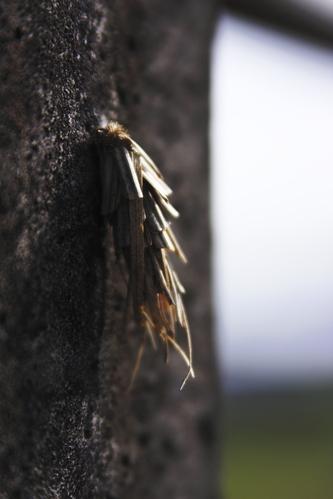 A_bagworm