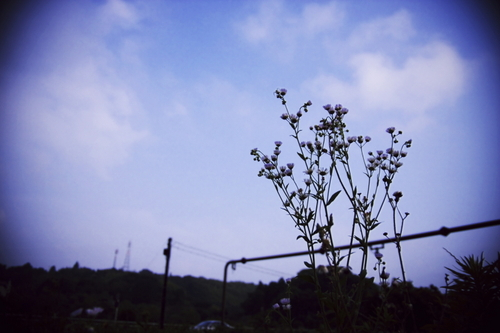 Blooming_to_the_sky