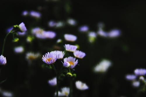 In_the_dream