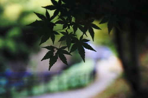 Still_green