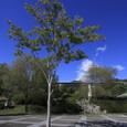 A_tree_2