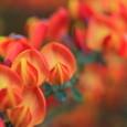 Beautiful_flower