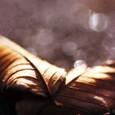 Flirtation_of_daydreaming_fallen_leaves