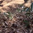 Winter_leaves