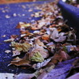 World_of_fallen_leaves